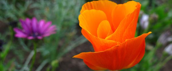 Flores Carta Enamorado